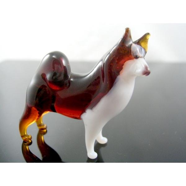 Hund -Rassehund-Laika-b8-10-17