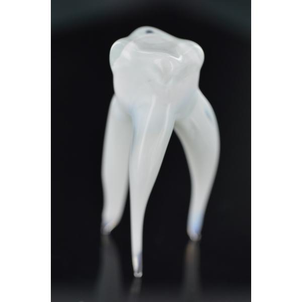 Gesunder Zahn - Glasfigur Modell eines Gesunden Zahnes
