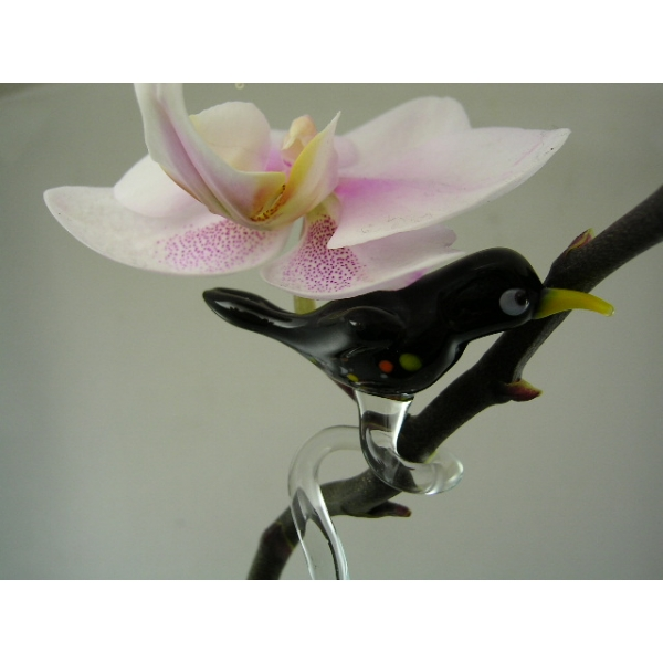 Orchideenstab Amsel - Orchid Stick