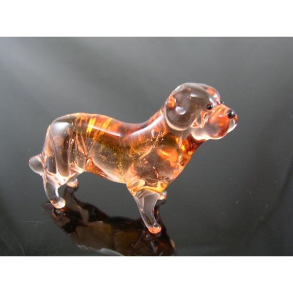 Labrador -Golden Retriever-Hund-b8-8-11-