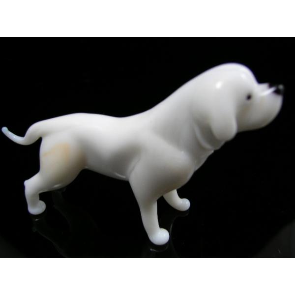Hund-Dog-Kuvasz 13-15 - Glastier