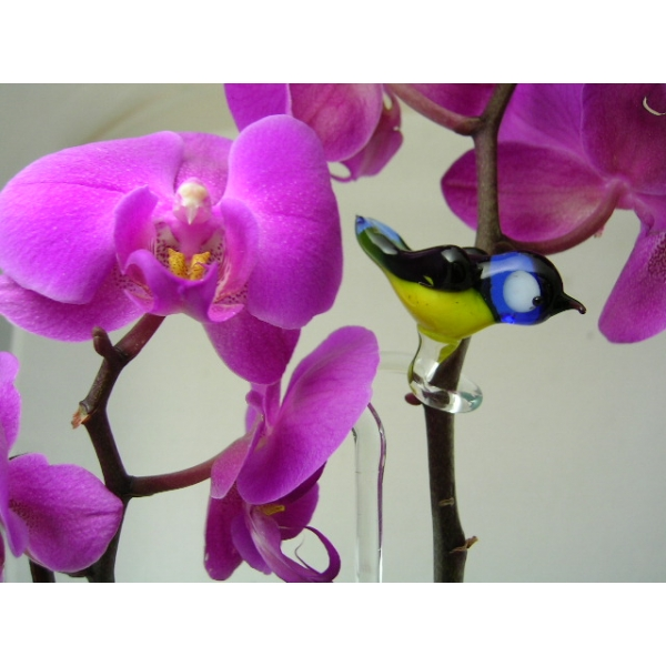Orchideenstab Meise 1 - Orchid Stick