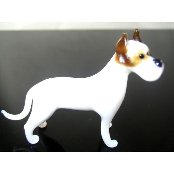 Hund-Rassehund -Deutsche Dogge -b8-9-4