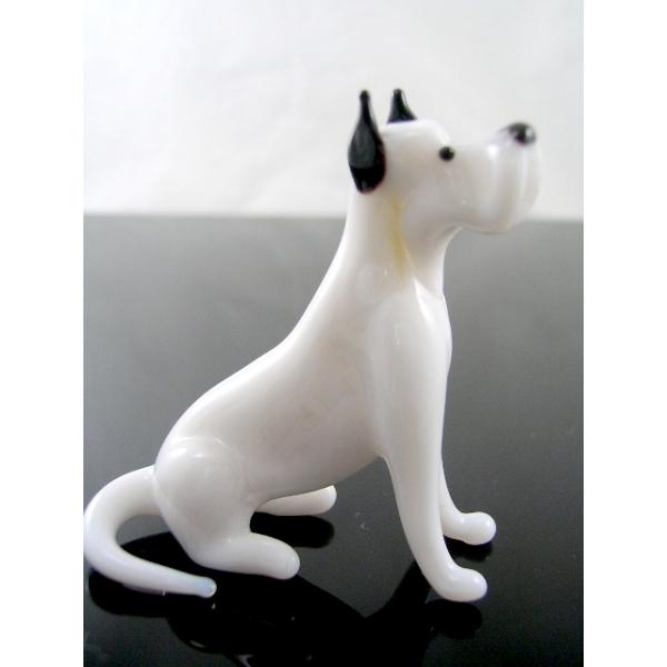 Hund-Rassehund -Deutsche Dogge -b8-9-6