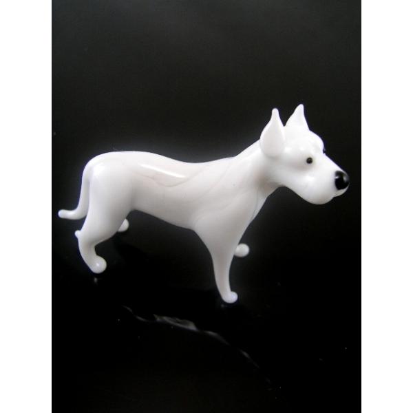 Hund-Dog-Dogo Argentino-Argentinische Dogge-b8-9-22