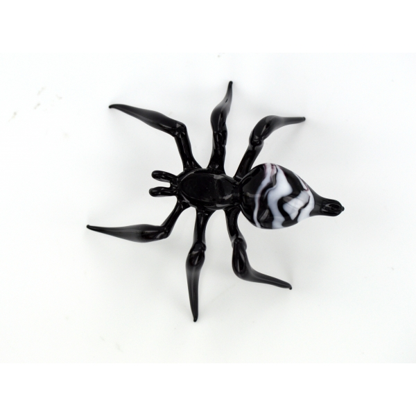 Spinne Schwarz Wei